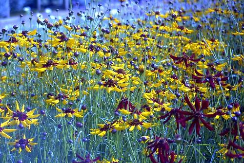 flowers isleofwight