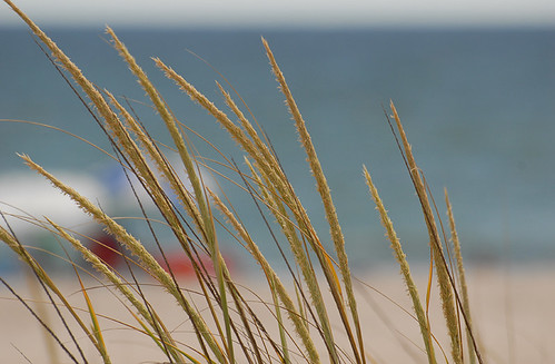 beach grass by Alida's Photos