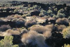 Cerro Gordo Buttermilk 225 (Steve Perdue) Tags: fallcolor 395 perdue easternsierra