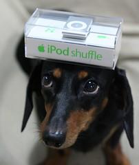 dog with iPod shuffle