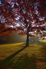 Autumn Sunrise (Wayne's World 7) Tags: tree beautiful leaves wonderful amazing perfect mood shadows fallcolors gorgeous great excellent unusual fav lovely eyecandy greatpicture impeccable greatcolors sunsets20061022