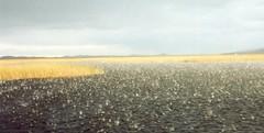 Hailstorm (rasmus_boegh) Tags: lake peru titicaca hail bolivia andes altiplano hailstorm