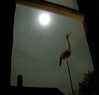 if i ever lose my eyes (JKönig) Tags: light moon bird home window silhouette night dark darkness grain stairwell noise alwaysthere andyouknowwhat ilovewhendarknessandlightclash anunplannedseries butrelatednonetheless btwthestreaksonthewindowarefromcondensation ifyouthinkimtoolazytofixthenailontheposteryoucanforgetcleaningthiswindow itsfloatinginthemiddleofa25foothighwall thothatcouldbetotallywrong isuckwhenitcomestoestimatingdistances ialsolovethemoon iusedtothinkitfollowedmewheniwasakid ispentalotoftimebeingaloneinthebackseat iwasamanonlychild soifeelveryconnectedtoit itwastheoneofthefewthingsthatwasconstant itstillfollowsme andwasstilltherewhenigothome soitookthis andthiswillbethelastofthestairwellseriesfornow okithinkineedtostoptaggingnow mytagsdontneedtobeasconstantasthemoon andwhenwewouldbeoutdrivingsomewhereatnightwhichinretrospectwasalotgahwhenthingswerebeyondfuckedupimremindedoflucindawilliamsandcarwheelsonagravelroadthemoonwasalwaystherethroughthetreeskeepinganeye followedmeorratherguidedmehomelastnight