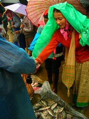 (naeurasia) Tags: china xishuangbanna