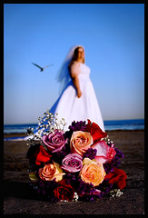 brides, bouquets, and seagulls by the seashore (slight clutter) Tags: wedding galveston beach bride seagull iloveflickr bouquet bridalbouquet slightclutter katyahorner slightclutterphotography