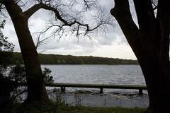 Einder (Rene Schmalschlaeger) Tags: rotterdam herfst rene wolken boom ren takken donker kant kralingsebos kralingseplas stijger langepad schmalschlger schmalschlaeger renschmalschlger httpwwwschmalschlaegernl