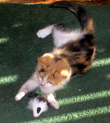~I Get The Mousie!~