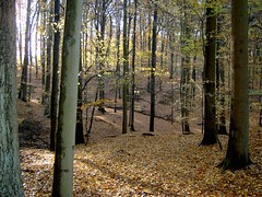 Sun through (Spotmatix) Tags: tree fall leaves woods belgium sunny vlaanderen groenendaal soignes
