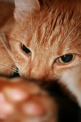Lucy 2 (benbennibenben) Tags: cat awake