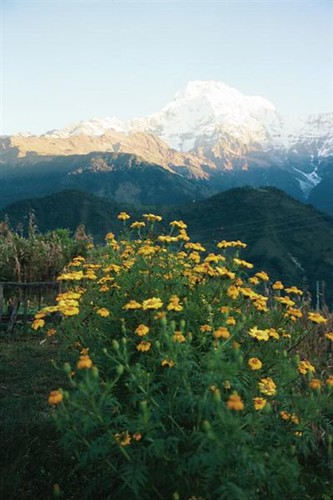 303S-Trek-Ghandruk-YellowSunrise