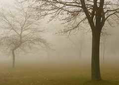 . . . and the fog rolled in . . . (gardinergirl) Tags: autumn lake toronto tree fall grass fog day branches fp explored abigfave