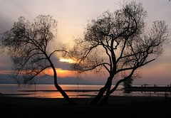 November Sunset (Heiko Brinkmann) Tags: sunset 15fav lake tree nature water 1025fav 510fav landscape ilovenature austria evening fourseasons bodensee vorarlberg lakeconstance beautyinlife natureslight beautyofnature abigfave p1f1 hrbranz