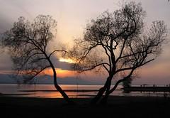November Sunset (Heiko Brinkmann) Tags: sunset 15fav lake tree nature water 1025fav 510fav landscape ilovenature austria evening fourseasons bodensee vorarlberg lakeconstance beautyinlife natureslight beautyofnature abigfave p1f1 hörbranz