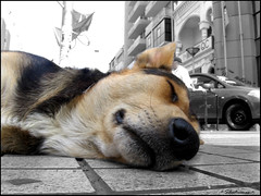 Sleepy (-= ierkof =-) Tags: concursoafta1