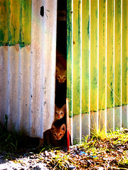 in a world of there own (notsogoodphotography) Tags: cats cat high prozac hulhumale cotcmostfavorited 10faves flickrdiamond pet100