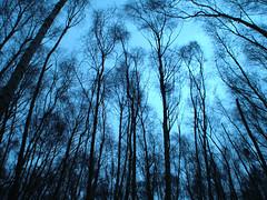 Storeton Wood trees in the wind 3 (jimmedia) Tags: road autumn winter tree green field grass weather forest woods branch top20winter mud wind windy trunk fields environment gail pathe brach