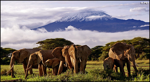 Elephants & Kilimanjaro