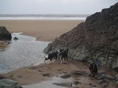 P1215827  Putsborough Beach (northdevonfarmer) Tags: bordercollie putsborough northdevon winterafternoon