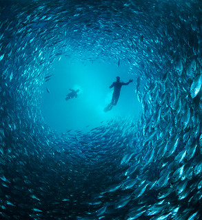 Tunnel of Fish