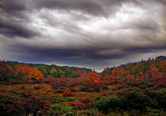 Autumnal (Nicholas_T) Tags: autumn sky field weather clouds rural landscape lowlight pennsylvania meadow creativecommons poconos barrens heaths stratocumulus monroecounty