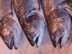 fish for sale (Zoe52) Tags: seattle unitedstates salmon publicmarket