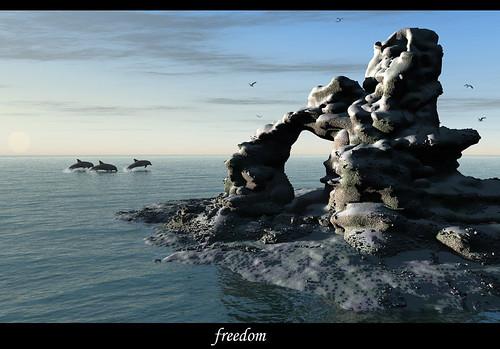 Rocky_Freedom