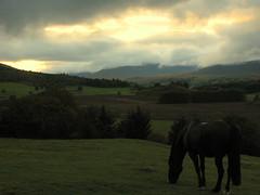 Sunset graze... (Truecraft Images) Tags: sunset horse black scotland perthshire grazing comrie