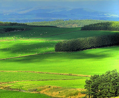 Strathmore Valley View with Square Crop (Magdalen Green Photography) Tags: trees green castle nature rural ilovenature scotland view angus albaluminis scottish iain strathmore tayside hdr glamis abigfave