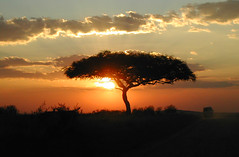 sunset Masai Mara (angela7dreams) Tags: africa travel school light sunset wild sky sun color tree home nature topf25 beauty silhouette clouds sunrise landscape outdoors gold star soleil nikon scenery kenya earth space conservation medal safari ciel planet coolpix environment astronomy lonely wisdom activism universe nuages gaia acacia espace singletree solarsystem global coucherdesoleil leverdesoleil toile masaimara astronomie bigmomma fv9 angelasevin topphotoblog shoutatthedarkness wiserearth superaplus aplusphoto singletreemosaic systmesolaire petalsmosaic petalsmosaicnew photofaceoffwinner photofaceoffplatinum bestnaturetnc07 pfogold singletree14 singletree9 singletree6 apr08pfobrackets pfoangela7 xmas12 xmasmosaic photocontesttnc09