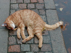 2006-11-01 (Risager) Tags: orange cat kat pavement fortov