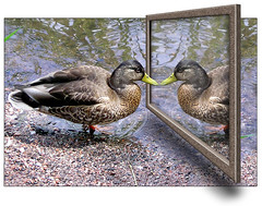 Duck and mirror (digikuva) Tags: bird water finland mirror duck helsinki europe 2000 heiluht olympus oob cityart manipulates p7306395