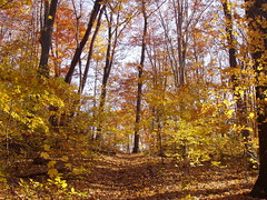 Van Buren State Park (Francesca (@WorkMomTravels)) Tags: autumn trees leaves michigan fallcolors vanburenstatepark