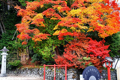 , Nikko, Japan (hk_traveller) Tags: trip travel autumn red vacation color green 20d yellow japan canon temple photo interestingness interesting asia flickr canon20d traveller explore turbo  nikko   douban top500  i500  turbophoto mywinners