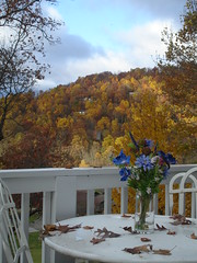 study in golds and blue (ConnArtist) Tags: mountains nc high fallcolor view north carolina vista highvista