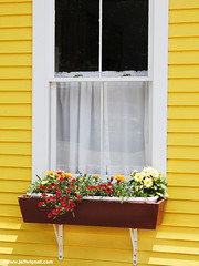 Window Box, Stonington, Maine (Jeff Wignall) Tags: flowers yellow harbor maine nikondigital windowbox stonington wignall