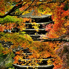 Autumn tint (shinichiro*) Tags: autumn japan nikon order 2006 d200 nara crazyshin hdr 1on1 1on1nature aplusphoto gettyselect order500 order20101106