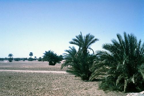 بلادي الجزائر الحبيبة 301340785_f36a40ed43.jpg