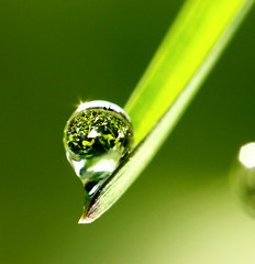 Effet loupe (Christian Chauvel (chrisghis)) Tags: reflection water lumix eau drop panasonic goutte dcr raynox raynoxdcr250 fz7 abigfave chrisghis christianchauvel