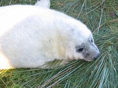 IMG_0093 (Maxeeey) Tags: seals donnanook