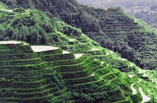 Banawe Rice Terraces is