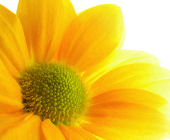 Bright and light (Gary*) Tags: light white flower macro yellow petals bravo bright interestingness6 lovephotography