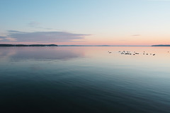 Lake Mendota: A cold winter morning before the sunrise (Mingfong) Tags: county morning pink blue winter lake reflection 20d water colors birds wisconsin composition sunrise canon landscape geotagged early fantastic december peace ducks peaceful story albumcover dane fowl migration mendota stories lakemendota middleton  migratingbirds danecounty luminouslandscape mingfong madison365 musicflyer  mingfongjan artbrochure sketchoflight