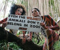 PETA Campaign (pretty_irish87) Tags: hotness