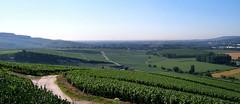Champagne vineyards Hautvillers (nickphotos) Tags: landscape champagne vineyards marne domperignon hautvillers frenchlandscape landscapeshot