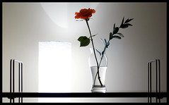 (scottintheway) Tags: light white flower glass lamp beautiful rose backlight perfect bright shelf vase elegant sillhouette drtao