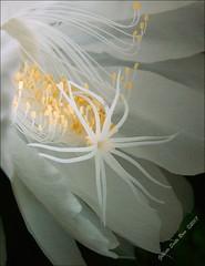 As curvas íntimas da dama..... .....DSCF4891 - by SantaRosa OLD SKOOL