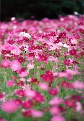 pink_carpet