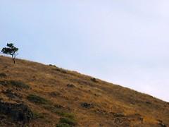 sky fears (pbo31) Tags: california above park ca blue light sky color nature up northerncalifornia landscape ilovenature photo colorful natural bright earth marin sanfranciscobayarea bayarea californian upwards northbay metroplex metroarea fullspectrum urbanarea
