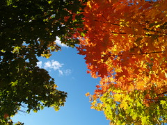 Rainbow Maples (farlane) Tags: color fall maple michigan leelanau leelanaudotcom