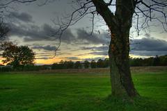 Tree-and-sunset (jason_minahan) Tags: autumn sunset newjersey nj princeton hdr mercercounty xti